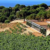 Alta Alella Winery Tour from Barcelona