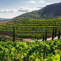 The Priorat Wine Tour from Barcelona