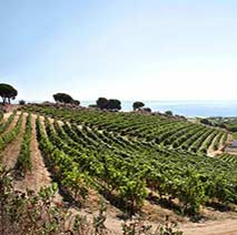 Wine tour from Barcelona to Alta Alella