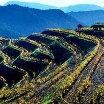 Private Priorat Wine Tour