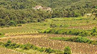 Half-Day Wine Tour to Penedes