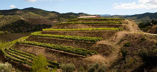 Vines planted in terraces in Priorat