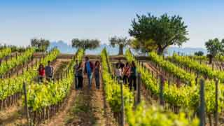 Winery tour to Penedès